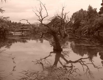 temple_arbre